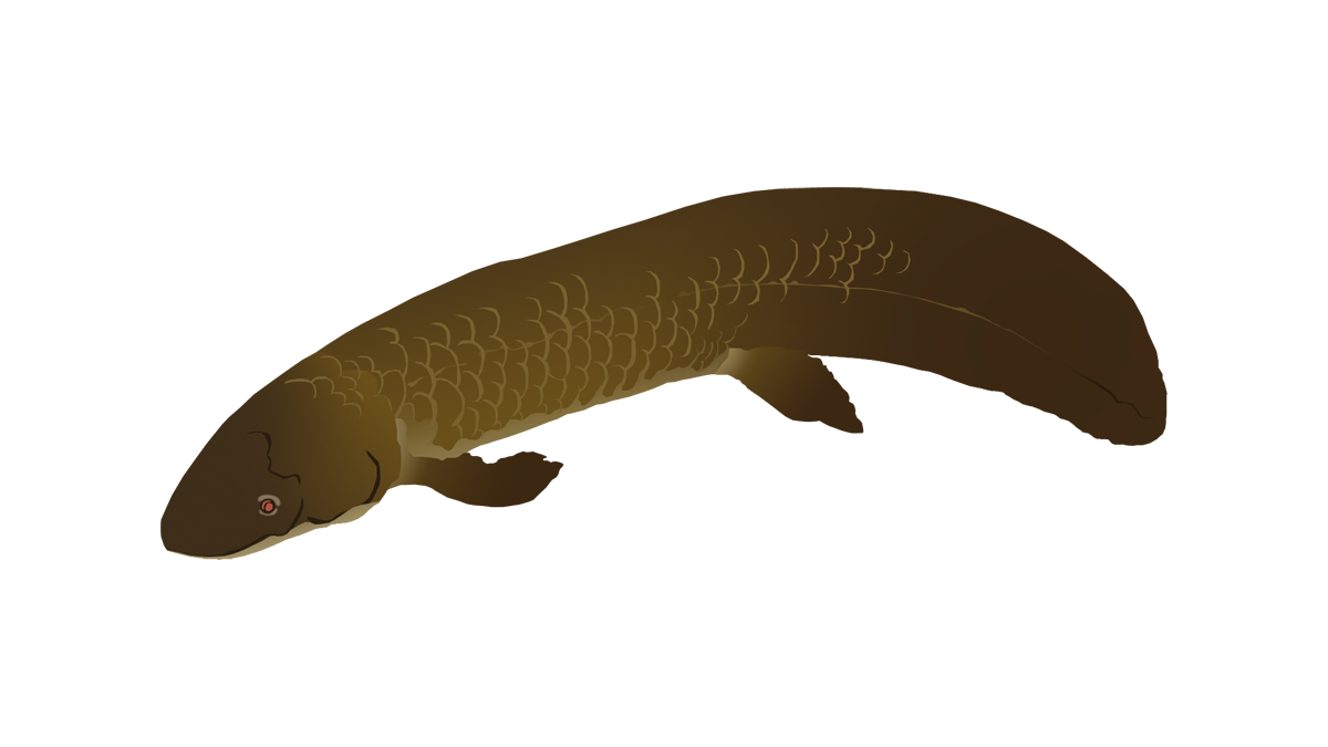 West-African lungfish