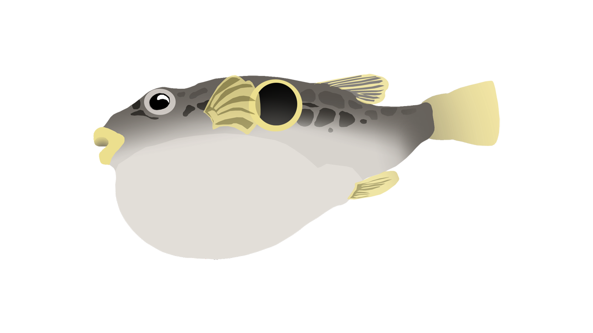 Japanese pufferfish